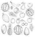 Delicious fresh harvested summer fruits sketches vector image
