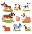 different breeds of dog set purebred pets animal vector image