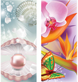 Vertical banners with pearl and flowers vector image vector image