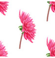 watercolor pink dahlia seamless pattern vector image