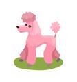 pink poodle dog purebred pet animal standing on vector image