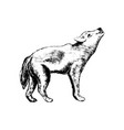 wolf icon grunge style vector image