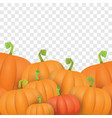 autumn orange pumpkins border design vector image