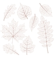 Dried leaves set EPS 10 vector image vector image