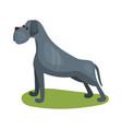cane corso dog purebred pet animal standing on vector image