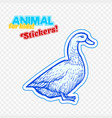 farm animal duck in sketch style on colorful vector image