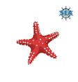 red starfish on white background isolated drawing vector image