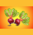 realistic vegetables beets with green leaves vector image