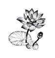 Water lily flowers on pond black and white vector image