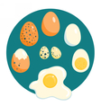 Chicken and quail eggs raw boiled fried vector image