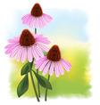 Echinacea vector image vector image