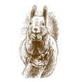 engraving of squirrel vector image