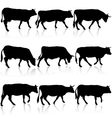 Collection black silhouettes of cow vector image vector image