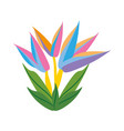 bird of paradise flower spring vector image