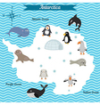 map of antarctica continent with different animals vector image