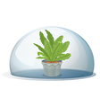 A plant inside the circular glass vector image