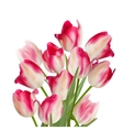 Bouquet of tulips on white background EPS 10 vector image