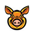 funny smiling orange pig vector image