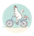 Cat riding a bicycle vector image vector image