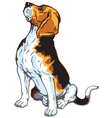 sitting beagle vector image