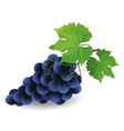 Black grape vector image