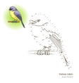 Yellow robin bird learn to draw vector image