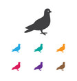 of zoology symbol on dove icon vector image