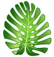 leaf plant monster vector image vector image