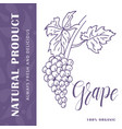 food design with fruit hand drawn sketch of grape vector image