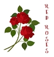 Flowers Bouquet Red Roses vector image