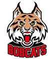 bobcat head mascot vector image