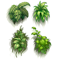 Leafy plants vector image
