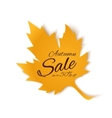 Autumn sale banner Yellow maple leaf vector image