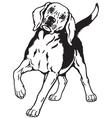 beagle hound black white vector image vector image