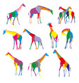 set of colorful silhouettes of giraffes vector image