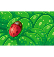 A ladybug and the green leaves vector image vector image
