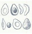 Doodle avocado vector image