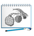 Human organs with cancer on paper vector image vector image
