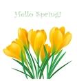 Spring crocuses vector image
