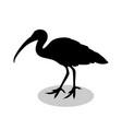 ibis bird black silhouette anima vector image