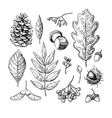 Autumn set with leaves berries fir cones vector image