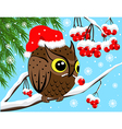 Winter image with red berries and owl vector image