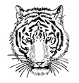 artwork of tiger face portrait head silhouette vector image