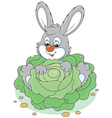 Bunny with a cabbage vector image vector image