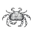 crab hand drawn isolated icon vector image