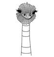 Ostrich bird head as symbol for mascot or emblem d vector image