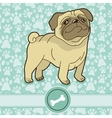 funny cartoon pug vector image vector image