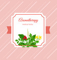 aromatherapy medical herbs label vector image