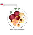 Apple Peach Nectaeines Pear are Popular Fruits vector image vector image