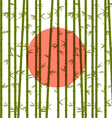 Bamboo on a background of the red sun vector image vector image
